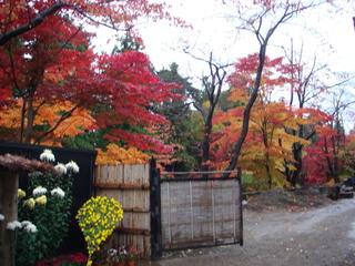 弘前城菊と紅葉まつり.JPG