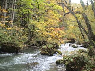 奥入瀬渓流.JPG